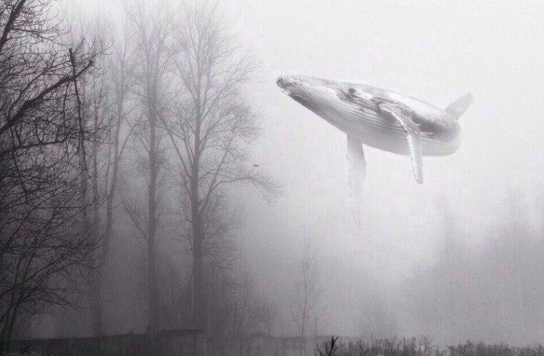 """В Ужгороді троє дітей перебігали дорогу перед автомобілями: поліція підозрює їх в участі у грі """"Синій кит"""""""