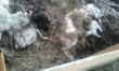 Чоловік влаштував під сусідським парканом могильник із мертвих тварин