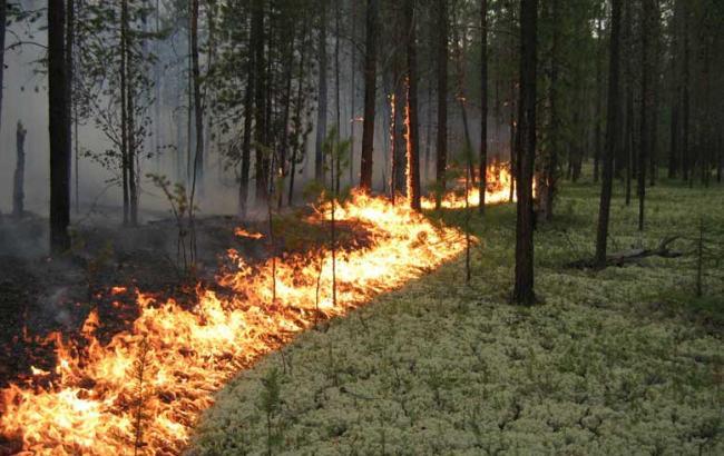 Лісівники Закарпаття вирішували як уникнути лісових пожеж