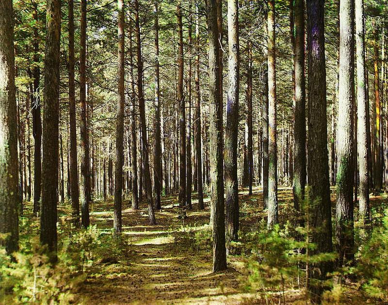 На Ужгородщині у лісі знайшли труп жінки