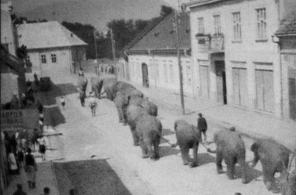 Справжні слони на вулицях Хуста: цікавий екскурс в історію міста