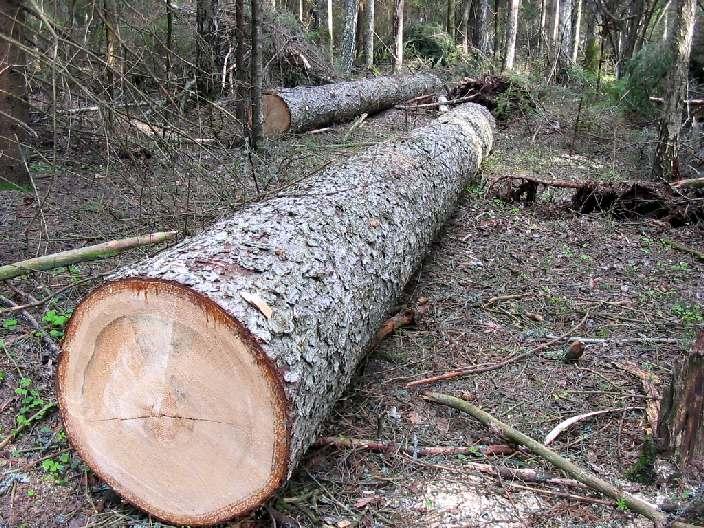Трагедія на Закарпатті: дерево вбило людину