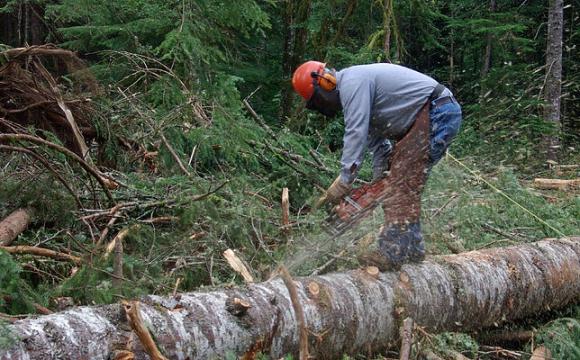 Прикордонники кажуть, що чоловік, якого вбило дерево, був працівником Ужгородського лісгоспу