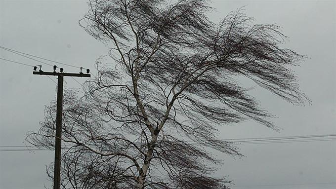 П'ять електричних стовпів повалив вітер на Перечинщині