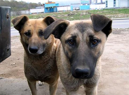 Ужгородські школярі збирали кошти для собачого притулку