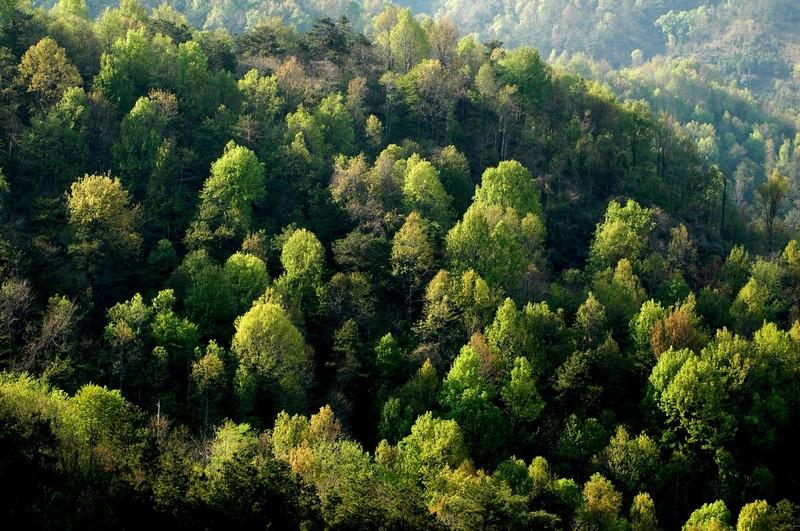 В області висадять близько 10 мільйонів саджанців дерев