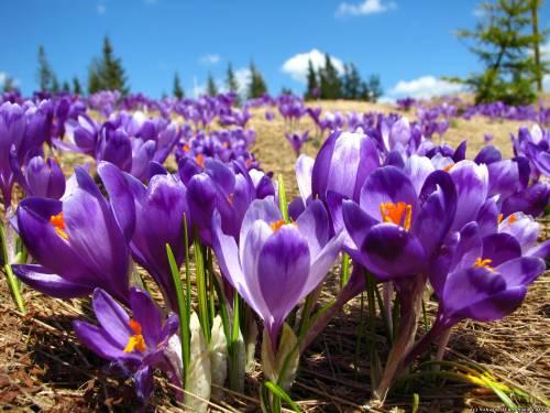 Сотні туристів їдуть у Закарпаття, щоб побачити диво природи