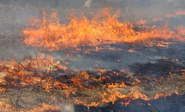 На Закарпатті масово горять поля