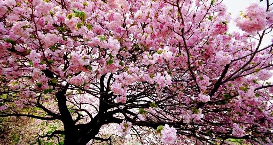 Фестивалі, виставки та концерти на Закарпатті у квітні