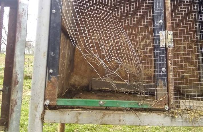 В мережі гадають, що це за істота загадково вбила кролів на Ужгородщині