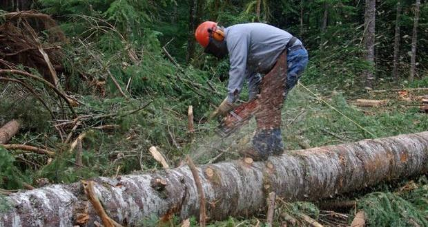 Юнак постане перед судом за незаконну вирубку дерев