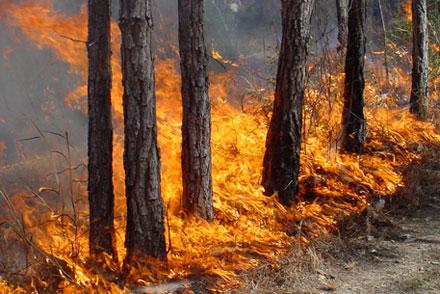 На території Воловецького лісового господарства сталася пожежа