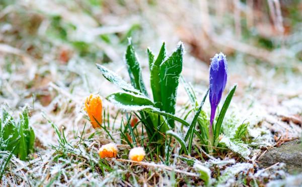 Закарпатські синоптики попереджають про заморозки