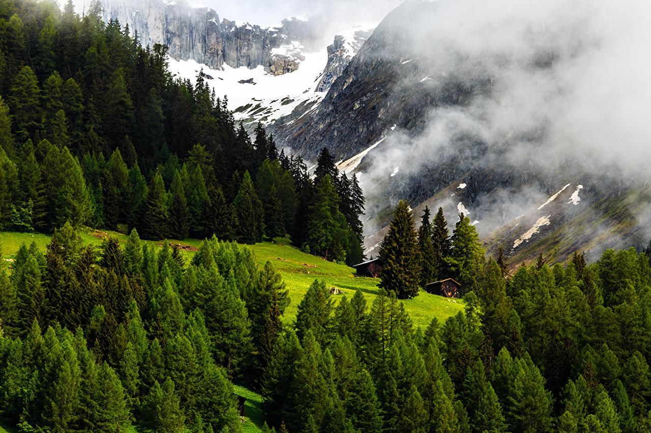 Закарпатцям на замітку: як у Швейцарії ліс бережуть