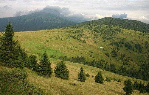 На Рахівщині посадовці незаконно виділили земельні ділянки вартістю понад 1 млн грн