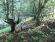 У лісі підстрелили дитину, яка збирала гриби