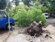 Потужний буревій наробив чимало лиха у закарпатському місті