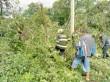 Наслідки несприятливої погоди на Закарпатті: у Тячівському та Рахівському районах падали дерева