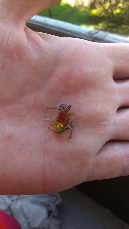 В Ужгороді невідомий павук вкусив чоловіка