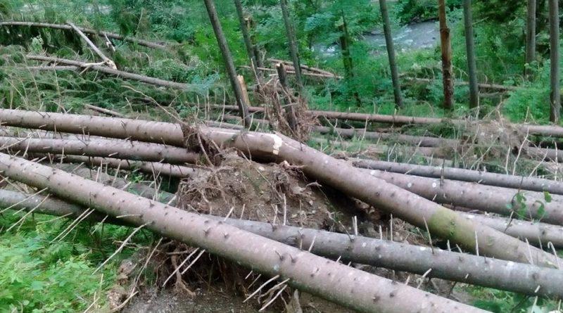 Атака стихії: буревій наЗакарпатті повалив дерева і зруйнував будівлю нашахті