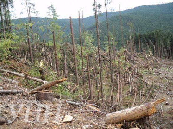 На Закарпатті буревій повалив 300 га лісу