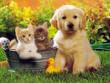 В Україні хочуть ввести податок на котів і собак