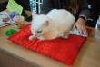 В Ужгороді відбувся конкурс краси серед котів