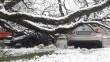 В Ужгороді дерево впало на дві машини