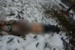 З'явилися нові подробиці моторошного вбивства у Чопі