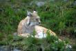 Українці обрали символ Карпат: названо тварину-переможця