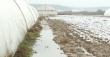 На Закарпатті затопило відомі на всю Україну парники з ранньою капустою
