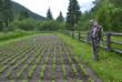 На Закарпатті при кожному лісництві планується облаштування лісового розсаднику