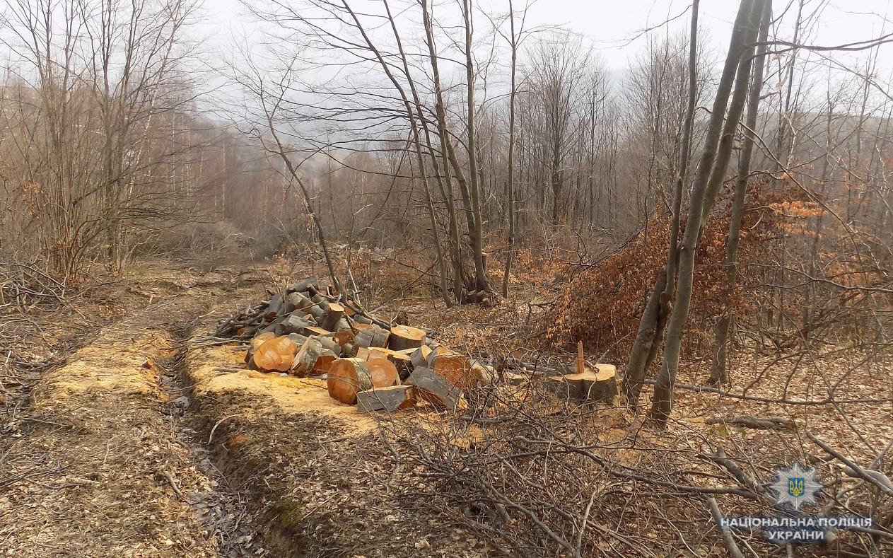 На Великоберезнянщині з'ясовують обставини вирубки лісу у Стужиці