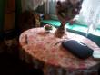 Конфлікт сусідів у одному із сіл Мукачівського району: жінка встромила чоловіку у живіт ніж