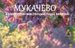 Квітень у Мукачеві: куди піти, аби цікаво провести час у місті