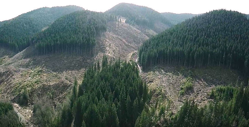 Рада схвалила мораторій на рубку лісу на схилах Карпат