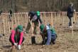 В Ужгородському районі висадили більше півгектара лісу