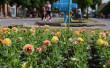 У центрі Мукачева висадили сотні квітів