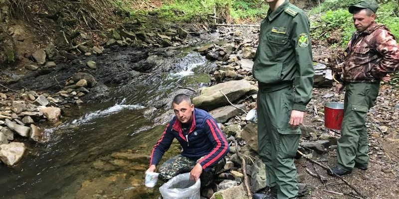 12 тисяч мальків форелі запустили у річки Міжгірщини