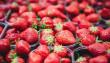 На фермі під Мукачевом збирають до шести тонн полуниці за сезон