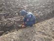 Під час польових робіт на Ужгородщині виявлено міну