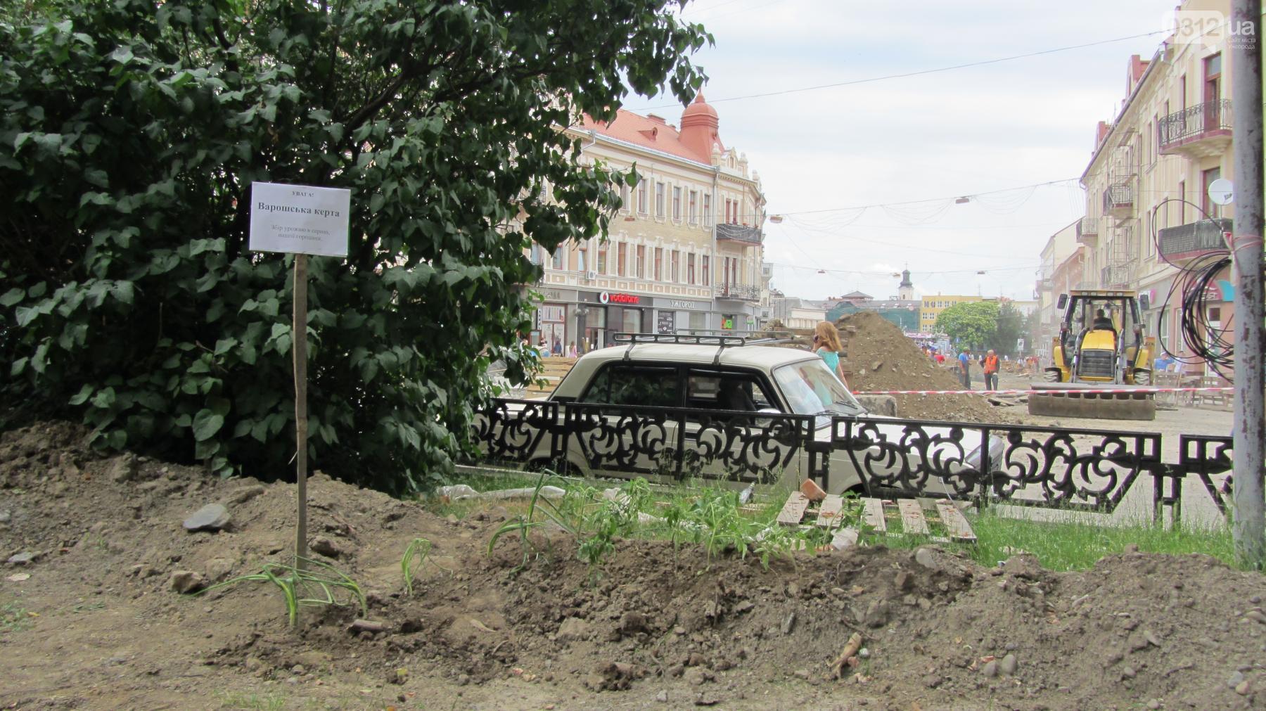 """""""Варишська керта"""": на площі Петефі в Ужгороді висадили помідори та цибулю"""