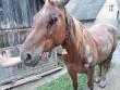 Знущання над конем: у поліції прокоментували шокуючий випадок