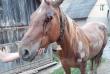 П'яний чоловік прив'язав коня до машини і тягнув тварину по асфальту