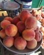 На Закарпатті вже продають спілі персики