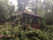 В Ужгороді дерево впало на альтанку з людьми, – соцмережі