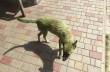 В Ужгороді познущалися над собакою