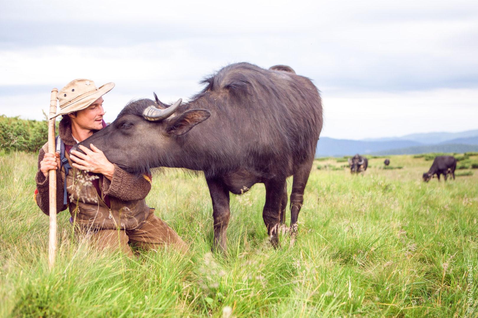 Карпатських буйволів рятує німецький еколог
