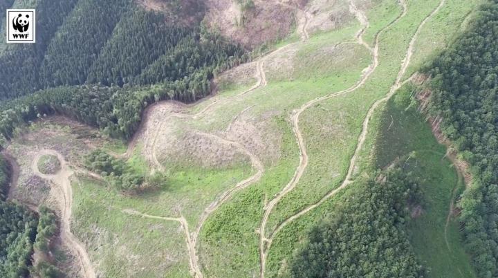 Екологи показали масштаби рубки дерев у Закарпатській області