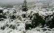 На гірськолижному курорті Драгобрат випав сніг